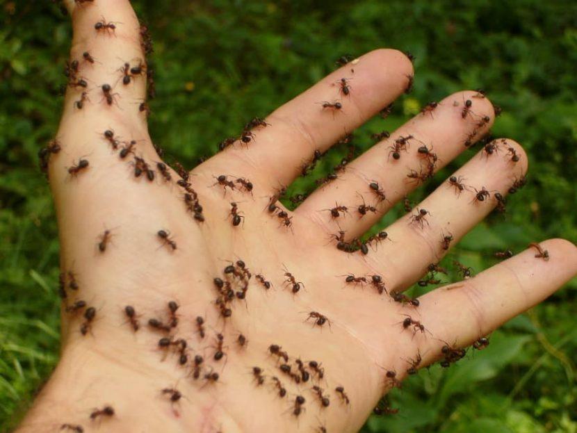 dezinsekcija-mrava