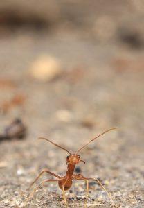 mravi-u-kuci