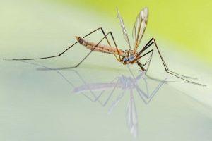 zaprasivanje-komaraca